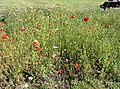 Rock-cornwall-england-tobefree-20150715-153654.jpg