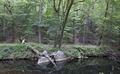 Rock Creek Park, NW, Washington, D.C LCCN2010641464.tif