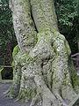 Rombergpark-IMG 1496.JPG