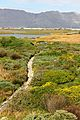 Rondevlei Wetlands Nature Reserve - Cape Town SA 6.JPG