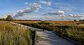 Rouge park trail panorama.jpg