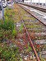 Ruderalflora Bahnhof Köniz2.JPG