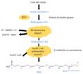 Ruta de biosíntesis del DHA.png