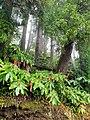 S@o Miguel island Flora and Fauna.jpg