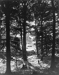 Fotografía de la Arboleda Sagrada por George Edward Anderson, apróx. 1907.