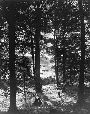 First Vision - Photograph of the Sacred Grove by George Edward Anderson, circa 1907