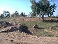 Salaiya, Madhya Pradesh 471101 - panoramio.jpg