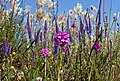Salepsot ^ Axveronika -2 - Flickr - Ragnhild & Neil Crawford.jpg