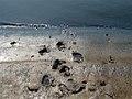 Salt Slush (17067500).jpg