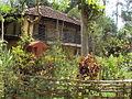 Samta - A garden.JPG