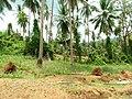 Samui 2013 May - panoramio (13).jpg