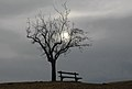 Sankt Georgen am Längsee Sankt Peter Dorfstraße Baum mit Bank 11022007 6037.jpg