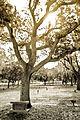Sarasota Memorial-4632-2.jpg