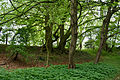 Schleswig-Holstein, Quickborn, Geotop Ka 006 NIK 3811.jpg