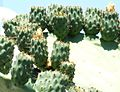 Scogliera Aci Castello-Sicilia-Italy-Castielli CC0 HQ - panoramio - gnuckx (22).jpg