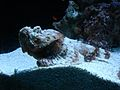 Seattle Aquarium 02816.jpg
