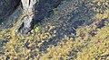 Seaweed - Nesodden, Norway 2020-09-20 (02).jpg