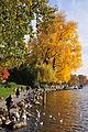 Seefeldquai - Hafen Riesbach 2011-10-28 16-34-14.JPG