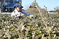 Senior Chief Machinist's Mate trims bushes at headquarters of People for the Ethical Treatment of Animals 140214-N-GM195-016.jpg