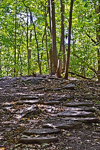Westmount Summit - A trail in the summit woods.