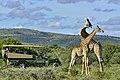 Shamwari Private Game Reserve.jpg
