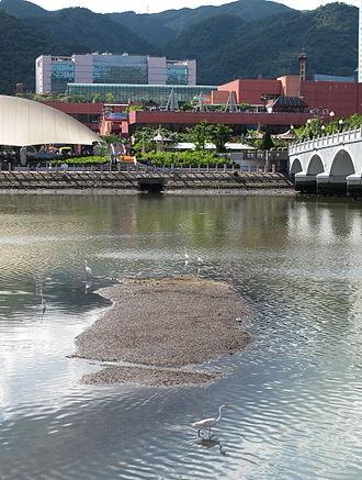 Shing Mun River - Birds on the river