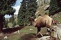 Silk Road 1992 (4367431355).jpg