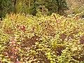 Simeria Dendrological park - autumn colours - panoramio.jpg