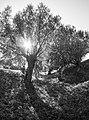 Skansen ved Roneklint - panoramio (1).jpg