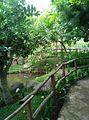 Small Set of Garden.jpg