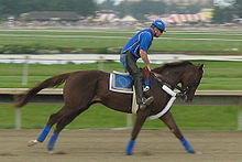 http://upload.wikimedia.org/wikipedia/commons/thumb/8/81/Smarty_jones.jpg/220px-Smarty_jones.jpg