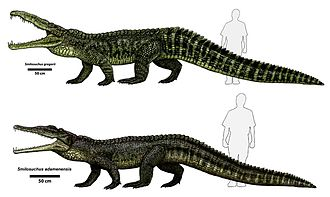 Phytosaur - Illustration of two Smilosuchus species, illustrating brachyrostral and dolichorostral snout types respectively.