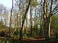 Speir's geilsland road wood 1.JPG