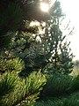 Spinnennetz im Sonnenlicht.jpg