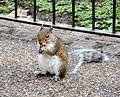Squirrel London 2015.jpg