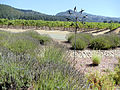 St. Francis Winery and Vineyard, Santa Rosa, California, USA (6710755353).jpg
