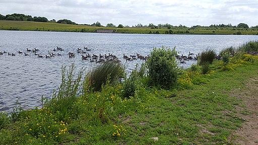 St Aidan's Nature Reserve1