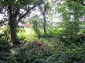 Stanney Wood, Ellesmere Port (Near Thirlmere Road) (4).JPG