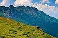Stara planina14.jpg