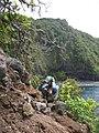 Starr-050405-5884-Schinus terebinthifolius-habitat with Ken-Keopuka-Maui (24116138853).jpg