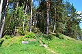 Staviškių piliakalnis pavasarį.JPG