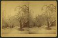 Storer Street, from Elm (Street), Saco, by Sawtelle, E. E. (Edward E.).png