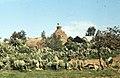 Storks nesting on Berber rondavel. North of Kenitra (37047299244).jpg