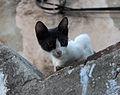 Stray Cat in Croatia.jpg