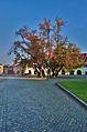 Stromy na Horním náměstí, Přerov.jpg