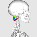 Suboccipital triangle03.png