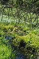 Swamp and creek, Krikaly.jpg