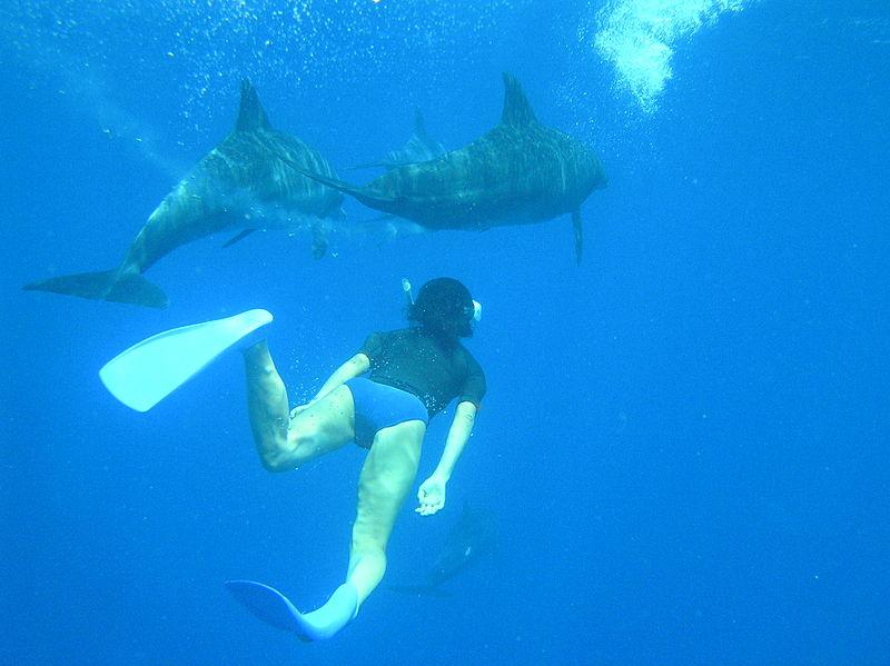 File:Swimming with dolphins Ogasawara.jpg