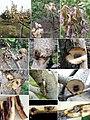 Symptoms caused by Liberomyces pistaciae on Pistacia vera (10.3897-mycokeys.40.28636) Figure 1.jpg