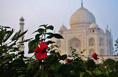 Taj blurred Flower.jpg